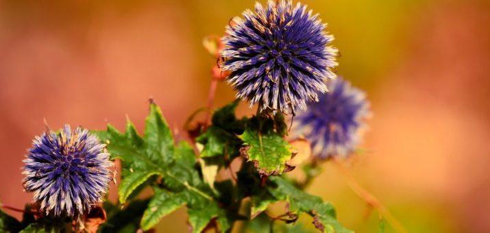 Aké rastliny vysadiť a nezalievať, pretože milujú sucho?