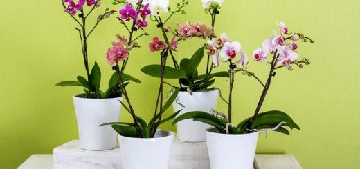 Orchidea je aj pre začiatočníkov!