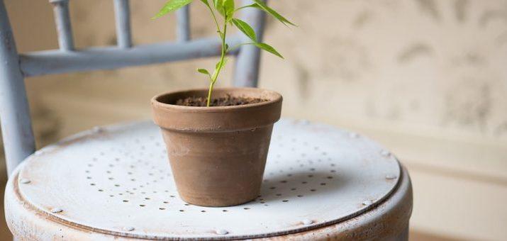 pěstujte si zeleninu