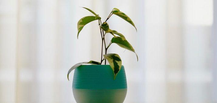 Prečo sa v byte nedarí izbovým rastlinám? Chyby robia samotní pestovatelia