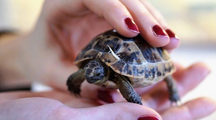 Suchozemská korytnačka - na čo si dať pri výbere pozor a ako sa o ňu starať?